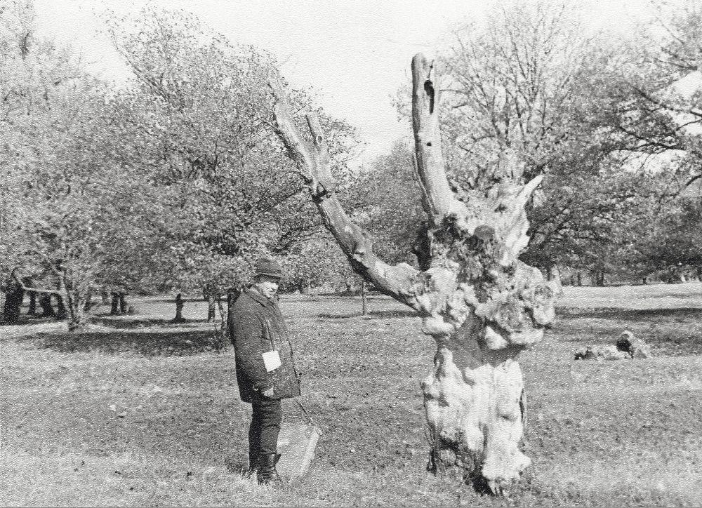 С.Григорьев возле сожжённого молнией дерева