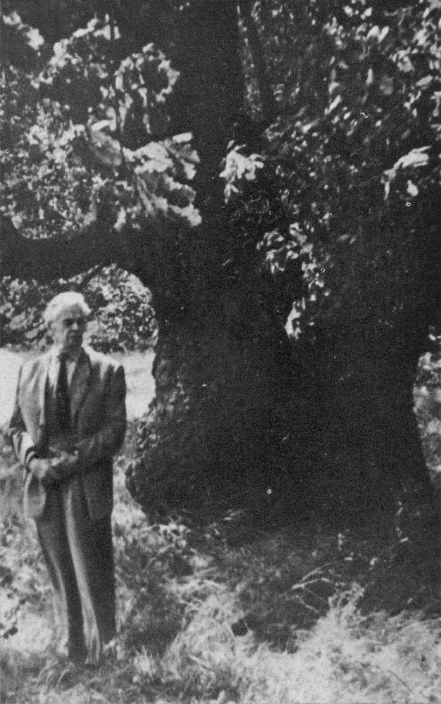 А.Шовкуненко возле своего любимого дуба вКонче-Заспе в 1957 г.