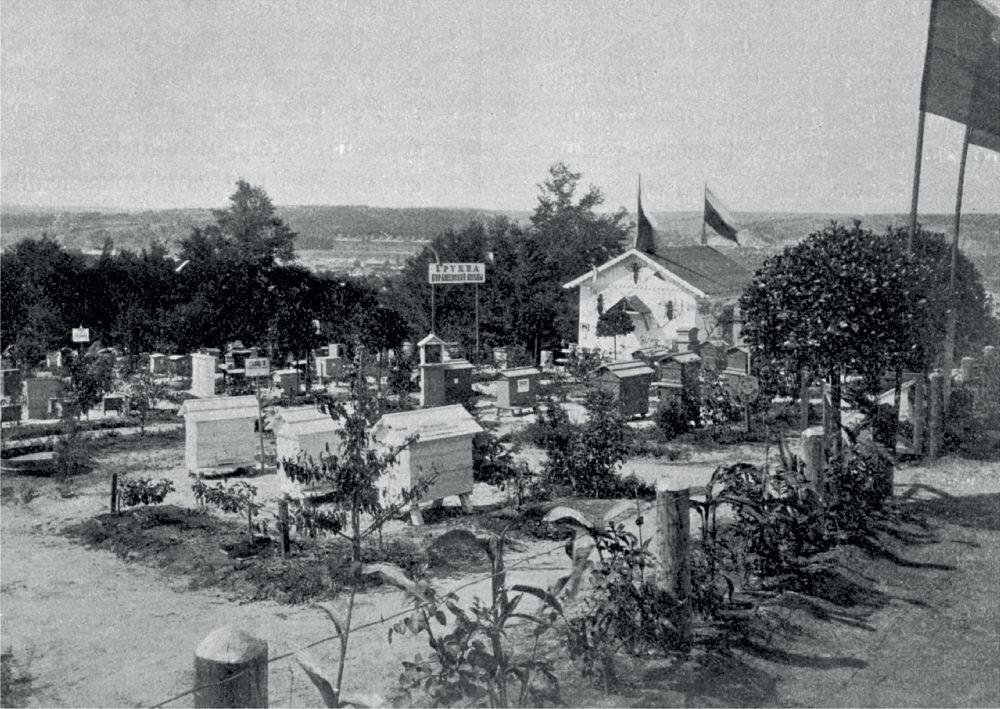 Выставочная пасека. Фото 1897г.